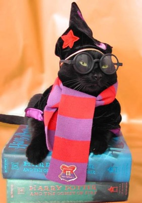 So, what exactly would Harry Potter look like if her morphed into a cat.  I dont think hed be a snooty/pissed off black cat.